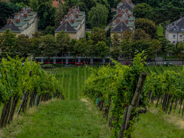 On top of a Viennese Vineyard.