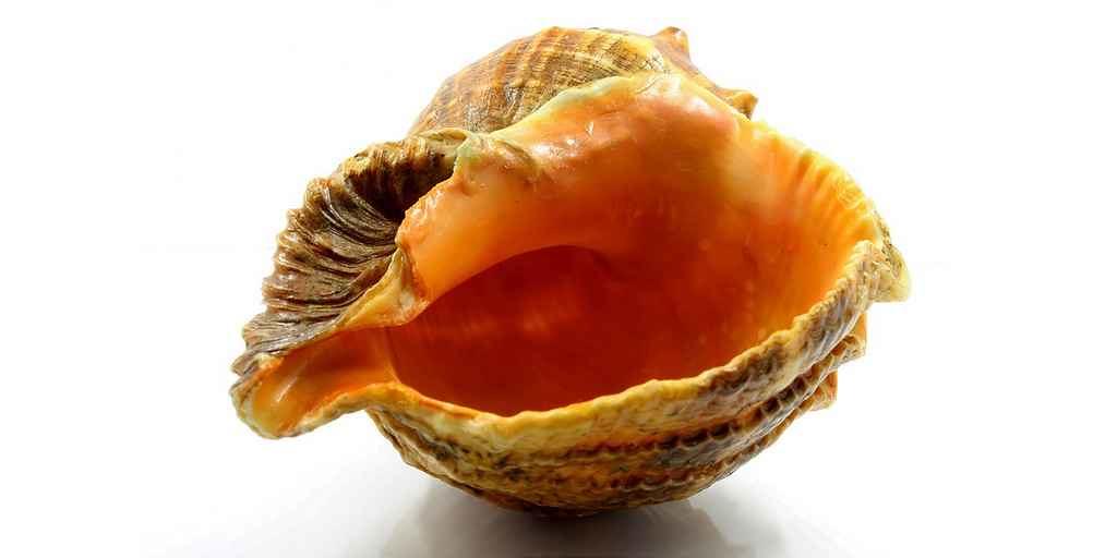 escargot-mer-anti-cancer-composé