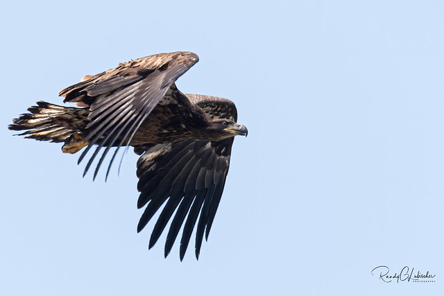 Bald Eagles of New Jersey | 2019 - 29