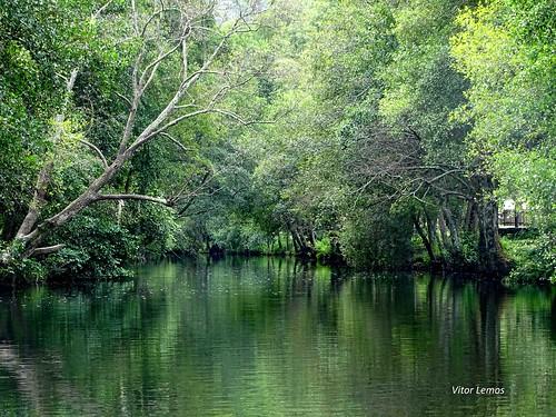 natureza sony verde calm serenidade serenity nature rio river water reflex green