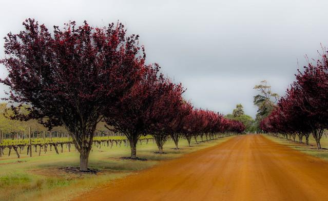 outback splash of red__