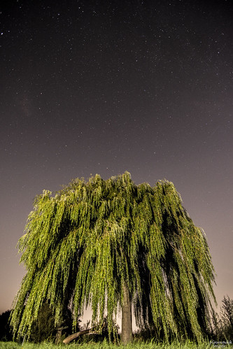 Tree under the stars | by j0gem