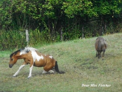 Cavalli (8)