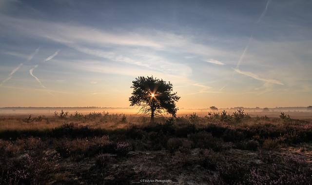 Sunrise over the heather 2