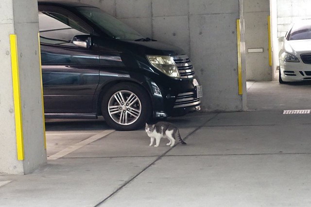 Today's Cat@2019-08-27