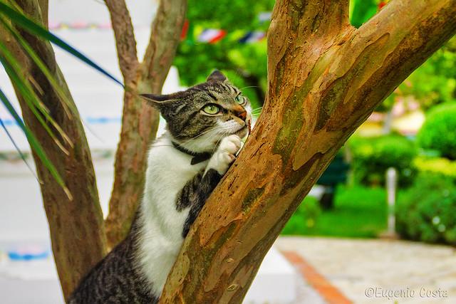 Gatti filosofi - Philosophers cats