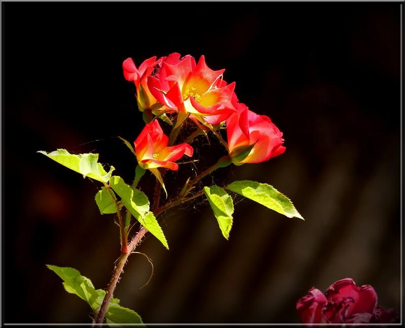 Au jardin des plantes. - Page 4 48630623751_6183a3a797_b