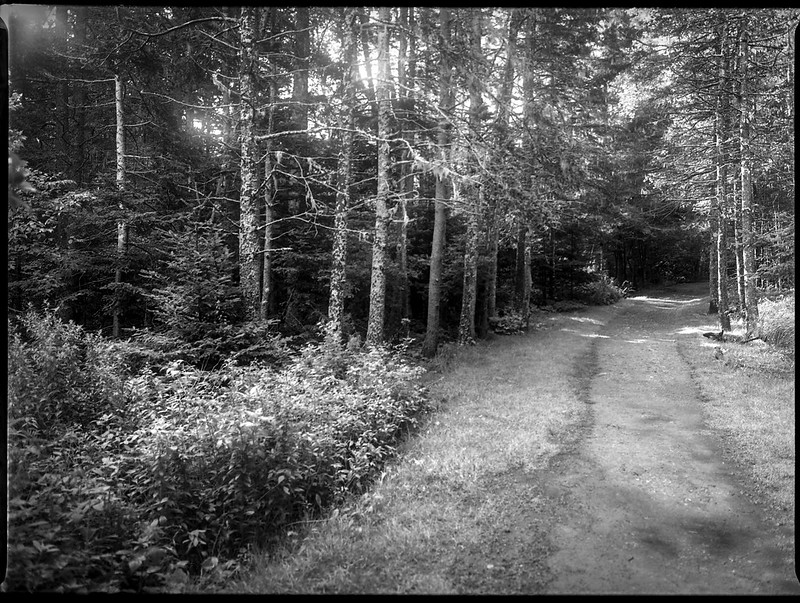pathway, toward the beach, forest, Owl's Head, Maine, Mamiya 645 Pro, mamiya sekor 45mm f-2.8, Kodak TMAX 400, HC-110 developer, August 2019 (1 of 1)