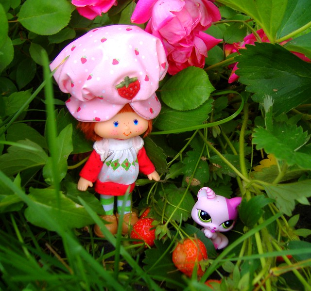 Strawberry Shortcake in patch #1