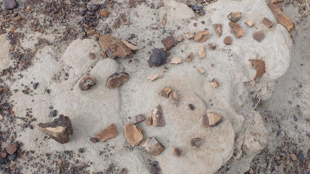 Parecen piedras pero son fósiles. A lo mejor son piedras porque no los distingo bien