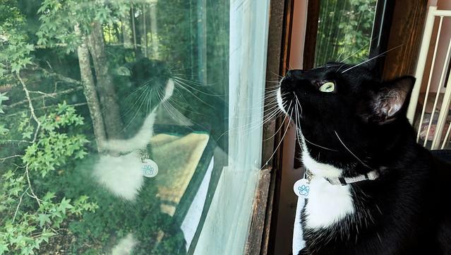 Dean bird watching