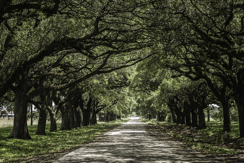 flickrexplore explored explore centralunit fortbendcounty houston sugarland texas texashistoricalcommission usa unitedstatesofamerica green historic image landscape liveoak liveoaks oaktrees old photo photograph prison road trees f56 mabrycampbell june 2017 june72017 20170607campbellh6a4732 100mm ¹⁄₈₀sec 100 ef100mmf28lmacroisusm
