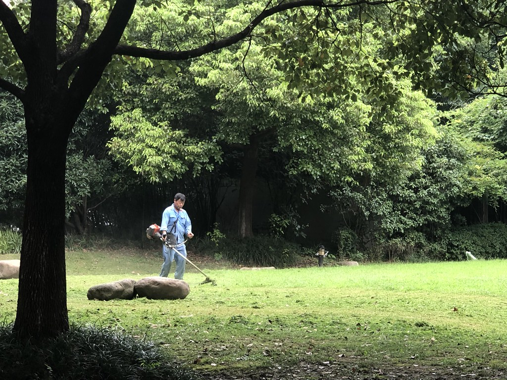 Mowing a Lawn by Weed Wacker in China