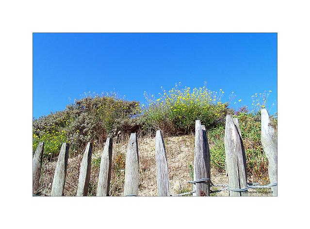 Fleurs de dune....
