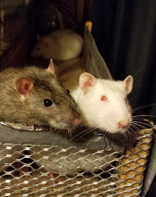 Bianca (Bibi) & Pearl