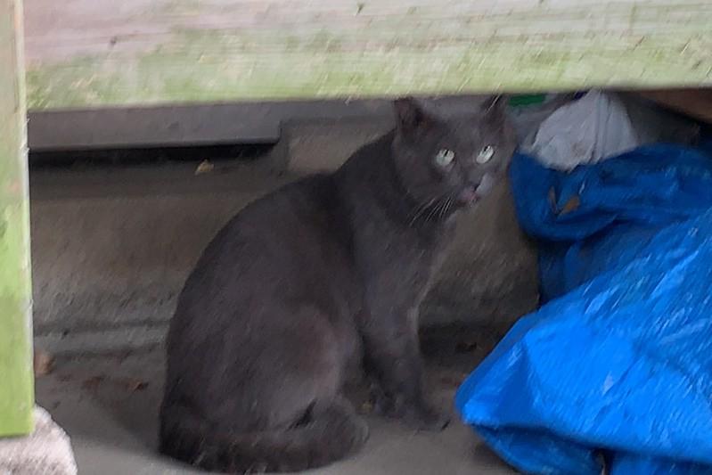 偽 東京いい道しぶい道 西新井関原通り通り 関原通り関原八幡神社の猫