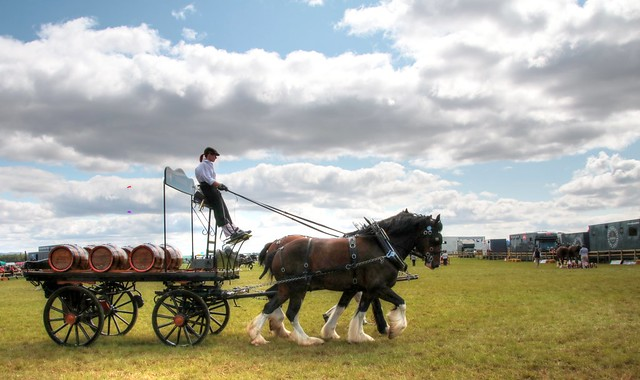 Shire Horses and Dray
