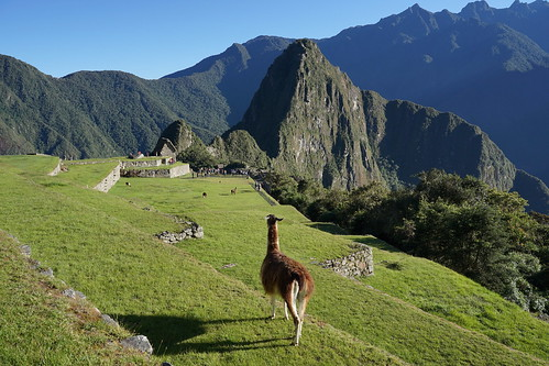 sony ilce7m2 alpha7ii mai may pérou peru machupicchu landscape paysage montagne mountain cité city architecture light lumière matin morning ombre shadow llama animal lama