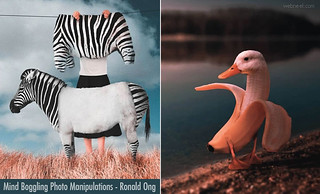Oreo Bicsuits or Zebra Body - Mind Boggling Photo Manipulation works By Ronald Ong