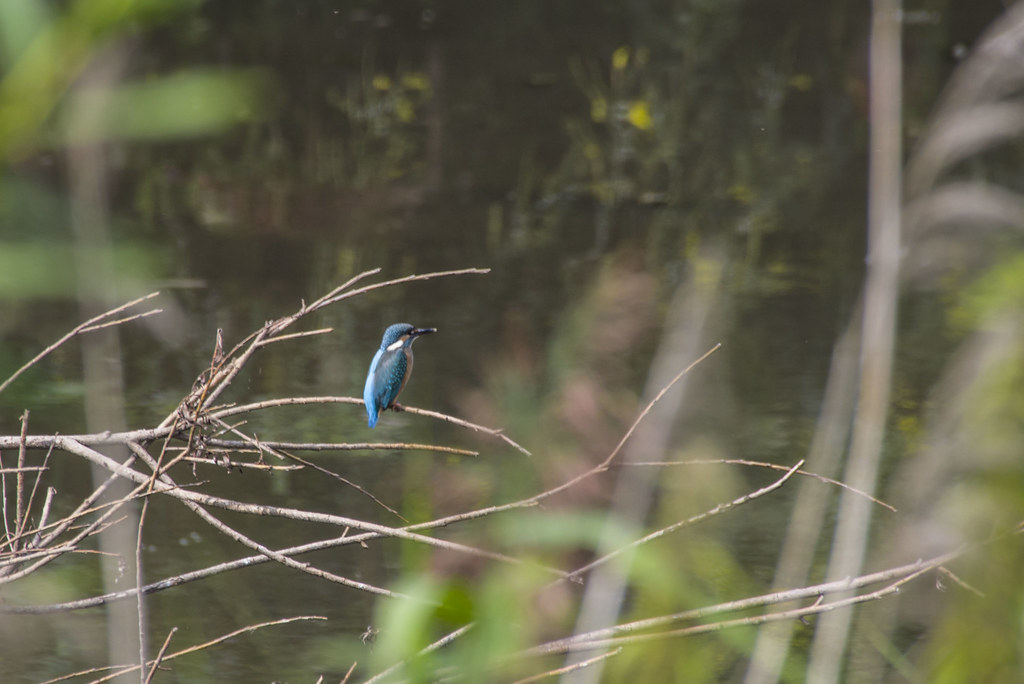 Волшебная синяя птица!