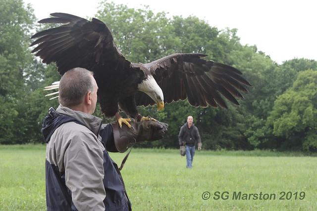 American Bald Eagle (and me!)
