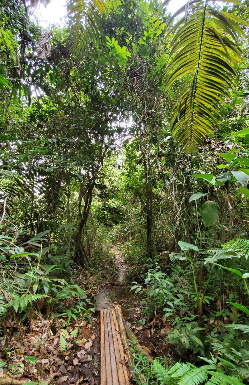 Amazon rainforest walk