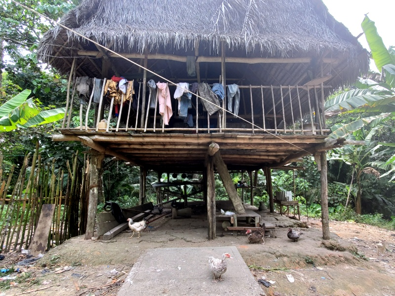 Amazon Jungle house