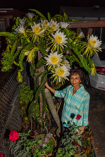 Mom Enjoying Our Dragonfruit Cactus Flowers in Another Superbloom