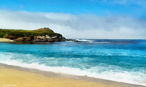 painterly beach carmel california dap