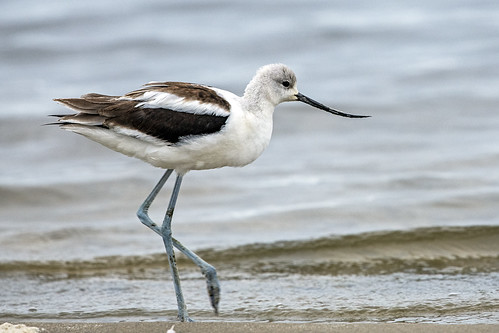 ny.mecox.avocet.close.1887