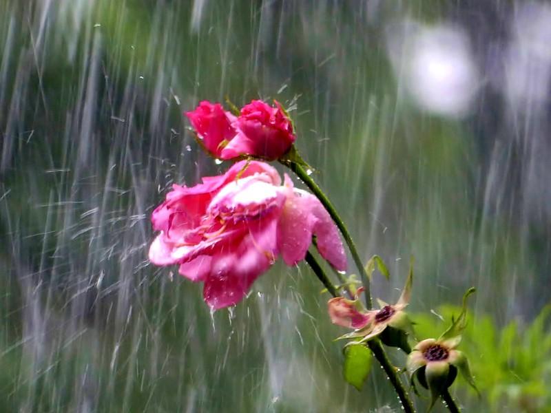 Endlich Regen*Finally rain ©️ BrigitteE