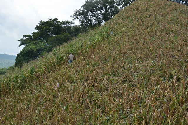Visit to CSV's in Olopa (Guatemala) and Santa Rita (Honduras)