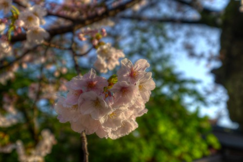 31-03-2019 Fujinomiya, Shizuoka pref (16)