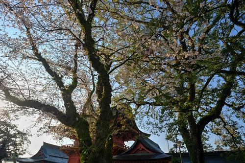 31-03-2019 Fujinomiya, Shizuoka pref (13)