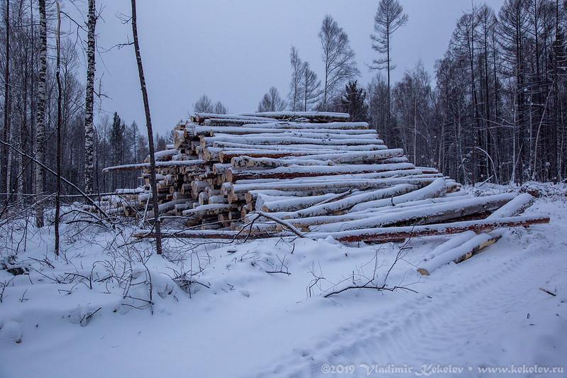 Баланс, который останется в лесу.
