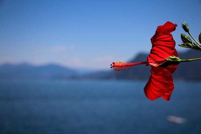 Mettete dei cannoni nei vostri fiori
