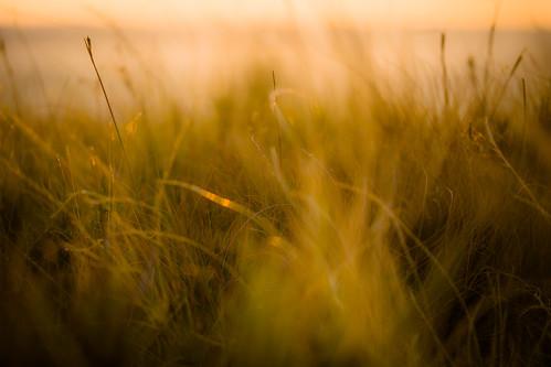 softly......sunrise