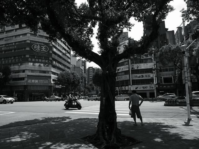 shade of the tree@Taipei, Taiwan