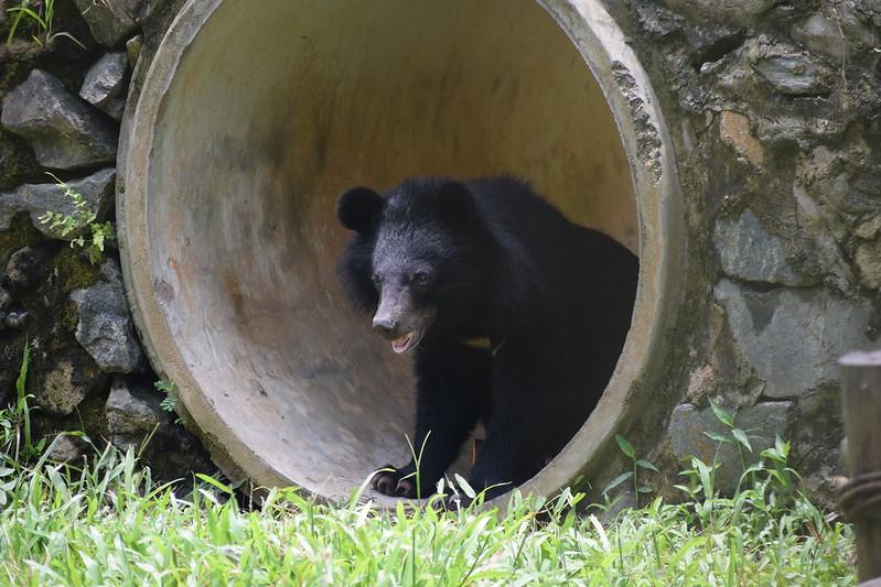 Sugar explores her enclosure