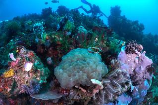Arrecife  (Komodo)