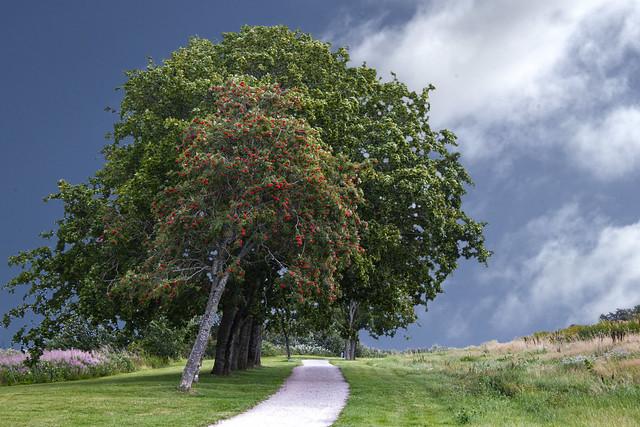 Green tree - blue sky