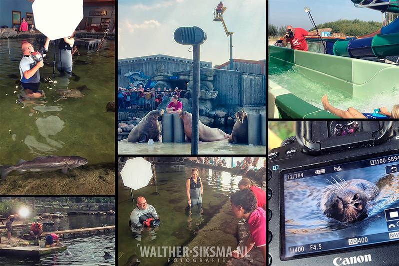 Behind the scenes tijdens shoot voor dolfinarium