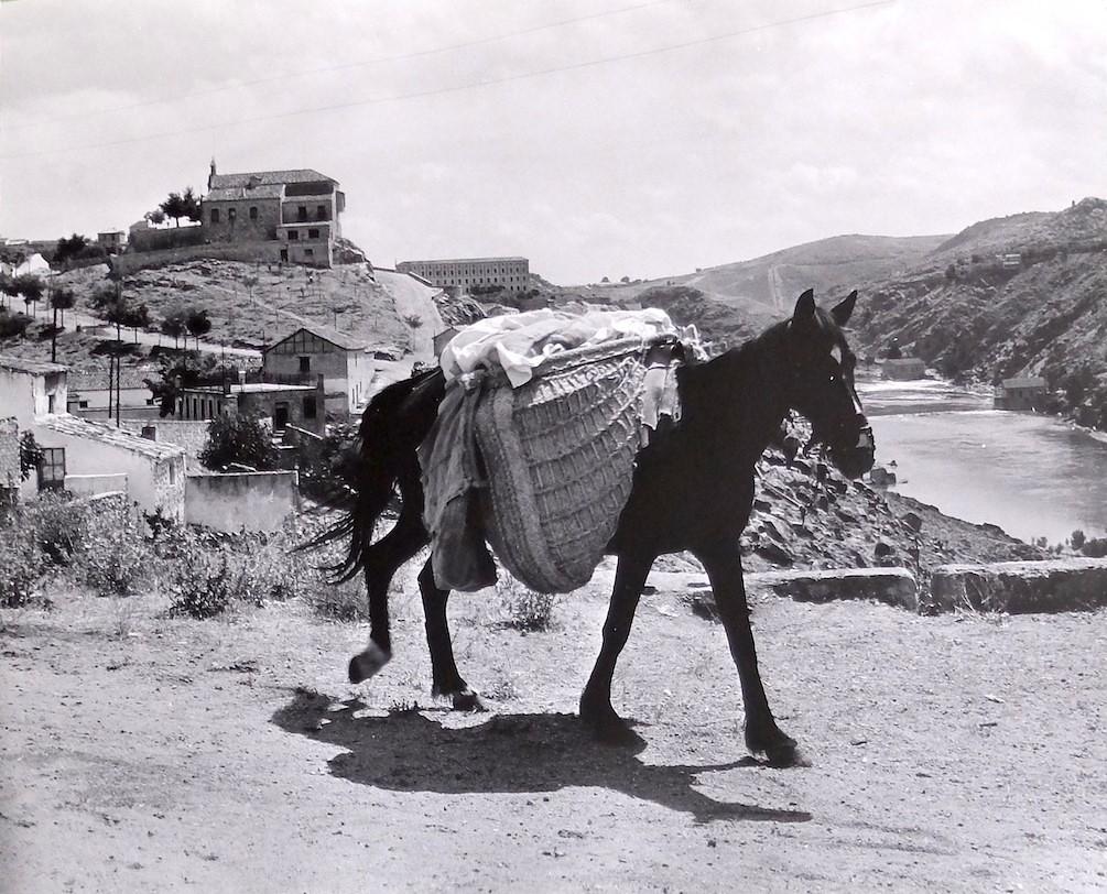 Un burro cerca del Cigarral de Caravantes con la ermita de la Cabeza al fondo en Toledo en 1964. Fotografía de Anno Wilms © Stiftung Anno Wilms, Berlin