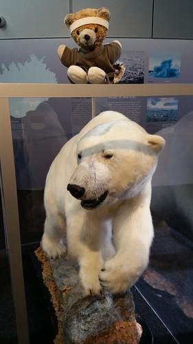 Kuma and the Polar Bear
