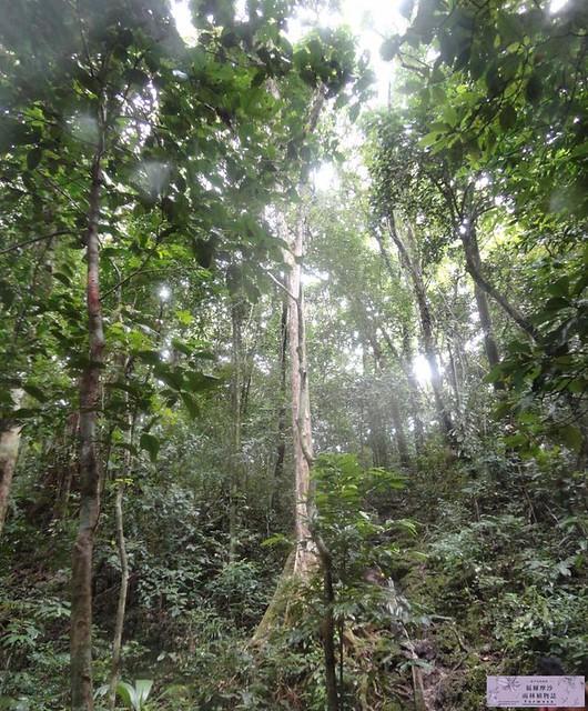 照片是在亞洲的雨林拍的。