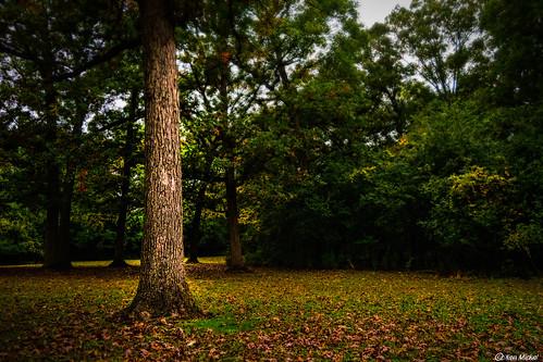 autumn fall forest illinois kenmickelphotography landscape orlandpark outdoors plants seasons tinleycreekwoods tree trees nature photography unitedstatesofamerica