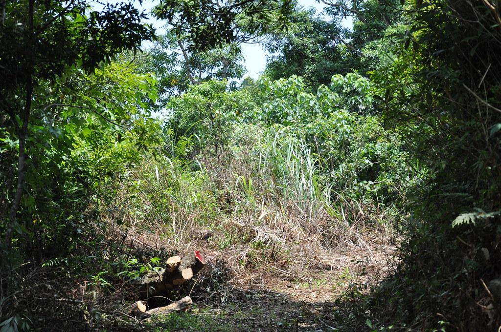 申請礦區現況雜木叢生,紅漆標誌為礦區邊界。孫文臨攝