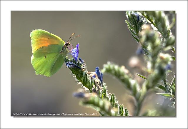 Comme un papillon sur une fleur