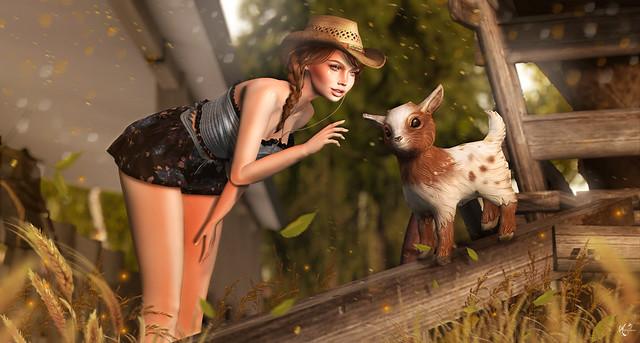 Farm friend