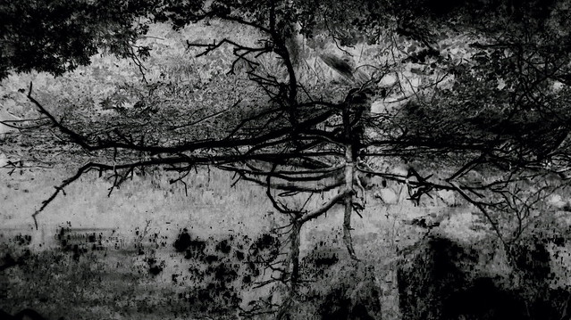 A tree fallen into a pond and its reflection. Abstraction. Monochrome.